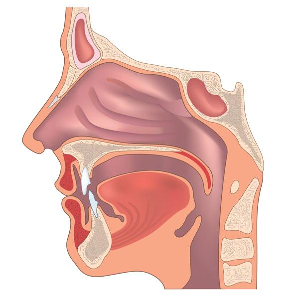 Función de la Ortodoncia